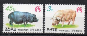 NORTH KOREA - 2007 - FARM ANIMALS - PIGS -