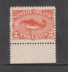 Newfoundland #48 Mint Never Hinged Margin Copy With Natural Gum Bends