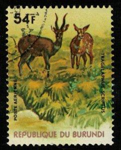 Animals (T-5069)