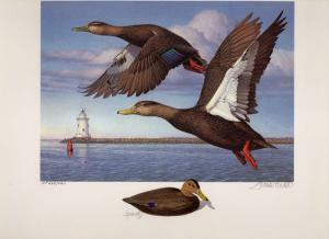 CONNECTICUT #1 1993 STATE DUCK PRINT ARTIST PROOF  COLOR REMARQUE by Tom Hirata