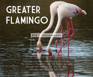 2021/01 - NEVIS - GREATER FLAMINGO             1V  complet set    MNH ** T
