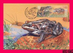 KYRGYZSTAN 2019 Nature Fauna Animals Reptiles Amphibians Frog Maxicard Card