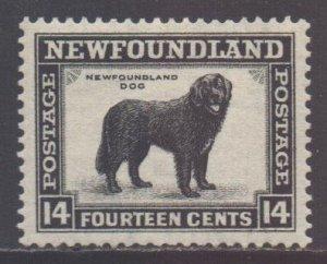 Canada Newfoundland Scott 194 - SG216, 1932 George V 14c MH*