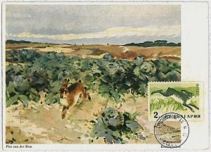 MAXIMUM CARD - POSTAL HISTORY - Russia USSR: Hares, Jackrabbits, Rabits, 1960