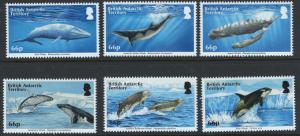 British Antarctic Territory Scott 501-506!Whales! MNH!