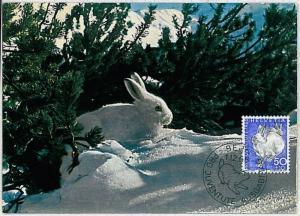 32209  MAXIMUM CARD - POSTAL HISTORY - Switzerland: Hares, White Rabits, 1966