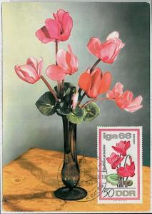 MAXIMUM CARD : nature FLOWERS  - GERMANY DDR 1966
