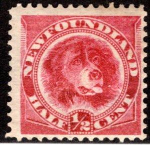 39, NSSC, Newfoundland, 1/2c, orange red, MHOG, Newfoundland Dog, F, postage st