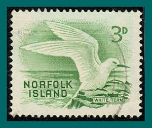Norfolk Island 1961 White Tern, used #31,SG26