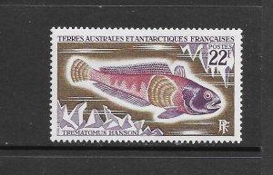 FISH - FRENCH SOUTHERN ANTARCTICTERRITORY #40  CODFISH   MNH