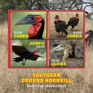 2020/11-GAMBIA - GROUND HORBILL    4V  complet set    MNH ** T