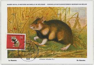 MAXIMUM CARD - POSTAL HISTORY -  Germany: Hamsters, Rats, Fauna, 1967