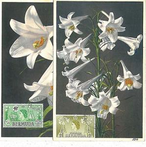 FLOWERS - 2 Maximum Card : BERMUDA 1952