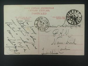 1910 Ceylon RPPC postcard Cover to Tonkin Vietnam Elephants in River