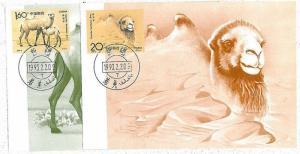 nature : MAXIMUM CARD - CHINA: CAMMELS - 1993 - SET OF 2 CARDS