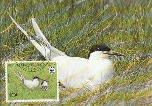 Benin 1989 Maxicard Sc #657 10fr Roseate tern WWF