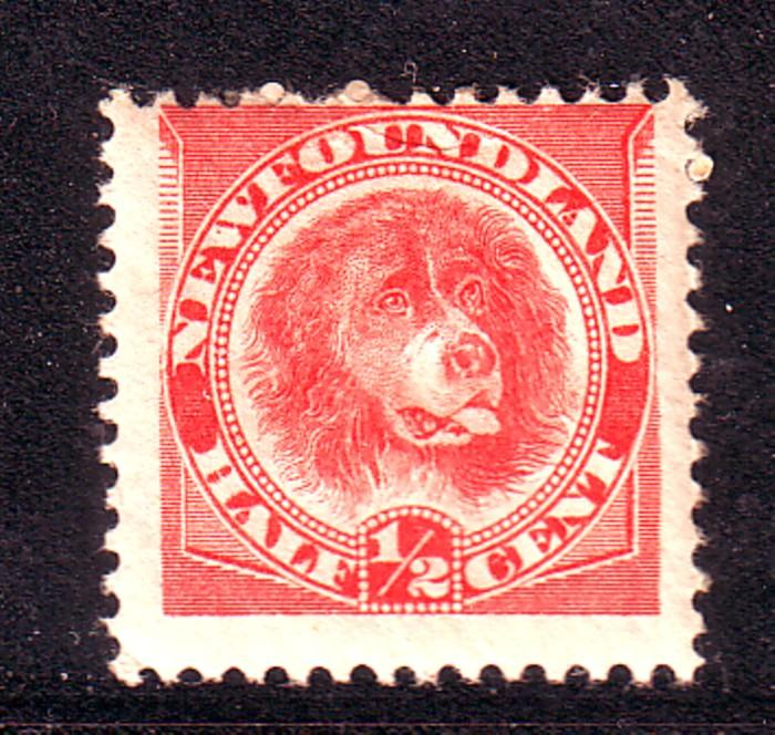 Newfoundland Sc 57 1896 1/2c orange red Dog stamp mint