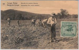 Congo Belge / Belgian Congo  - POSTAL STATIONERY CARD:  PLANTING SWEET Potatoes