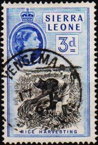 Sierra Leone. 1956 3d S.G.214 Fine Used