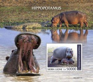 SIERRA LEONE - 2019 - Hippopotamus - Perf Souv Sheet - MNH