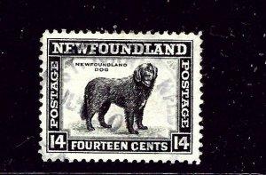 Newfoundland 261 Used 1941 Dog