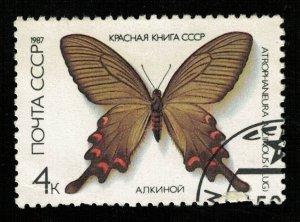 Butterfly (TS-2113)