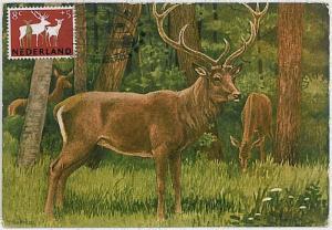 32193 MAXIMUM CARD - POSTAL HISTORY - Netherlands: Deers, Moose, Hunting, 1960