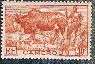 Cameroun 305 MLH Zebu and herder (BP5424)