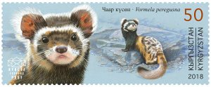 Stamps of Kyrgyzstan 2018. - Red Book of Kyrgyzstan - Marble Ferret. Stamp.