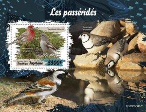 TOGO - 2019 - Birds : Sparrows - Perf Souv Sheet - M N H