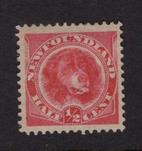 Newfoundland  #56  MH   1887  Newfoundland dog  1/2c  rose red