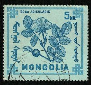 Flower, Mongolia (T-8272)