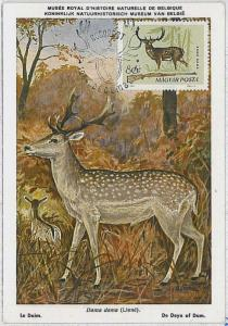 MAXIMUM CARD - POSTAL HISTORY -  Hungary: Deer, Hunting, Fauna, 1964