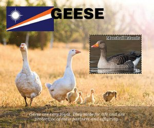 YEAR 2020/11-MARSHALL ISL - GEESE       1V complet set    MNH ** T