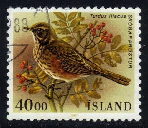 Iceland #643 Redwing Bird, used (0.70)