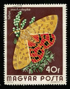 1974, Butterfly (Т-8593)