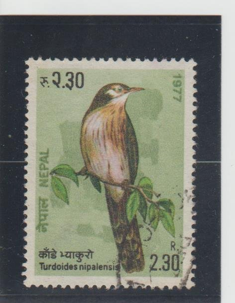 Nepal  Scott#  334  Used  (1977 Nepalese Laughing Thrush)