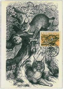 MAXIMUM CARD - POSTAL HISTORY - Albania: Lynx, Wild Cats, Fauna