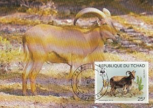 Chad 1988 Maxicard Sc #574 25fr Barbary sheep WWF