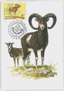 MAXIMUM CARD - POSTAL HISTORY -  Hungary: Rams, Hunting, Fauna, 1971