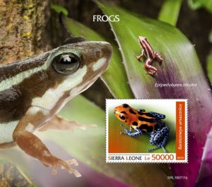 SIERRA LEONE - 2019 - Frogs - Perf Souv Sheet - MNH