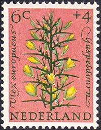 Netherlands # B344 mnh ~ 6¢ + 4¢ Flowers - Gorse