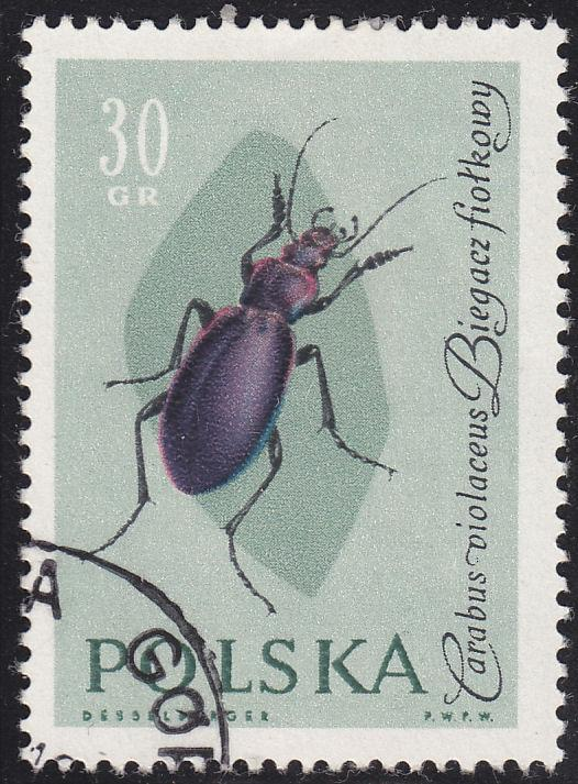 Poland 1030 USED 1961 Violet Runner