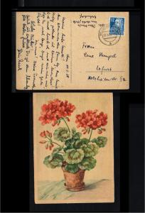 1950 - Allied Occupation Picture postcard - Flora - Flowers [B09_160]
