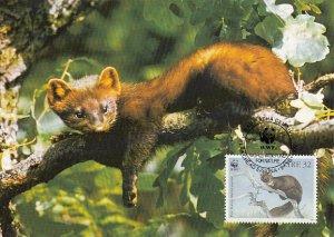 Ireland 1992 Maxicard Sc #869 32p Pine martens WWF