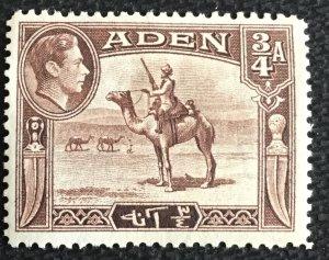 Aden #17 *MH* Single Camel Corpsman