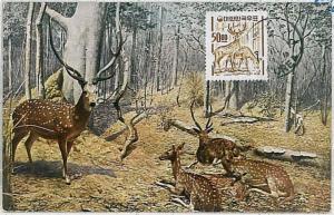 NATURE wild animals  - MAXIMUM CARD : KOREA