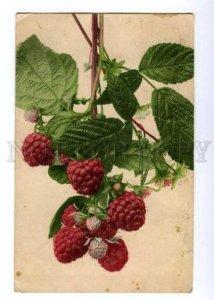 146269 Raspberry NOVOKONSTANTINOV to SMELA Smila Kiev Ukraine
