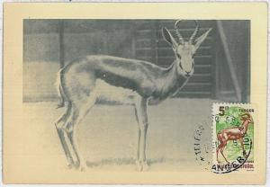 MAXIMUM CARD - POSTAL HISTORY -  Tanger: Antelope, Wild Animals, Benefic Stamp