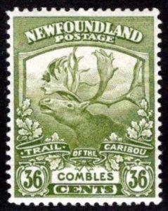 118, NSSC, Newfoundland, 24c bistre, MLHOG, F, Cambrai, Trail of the Caribou
